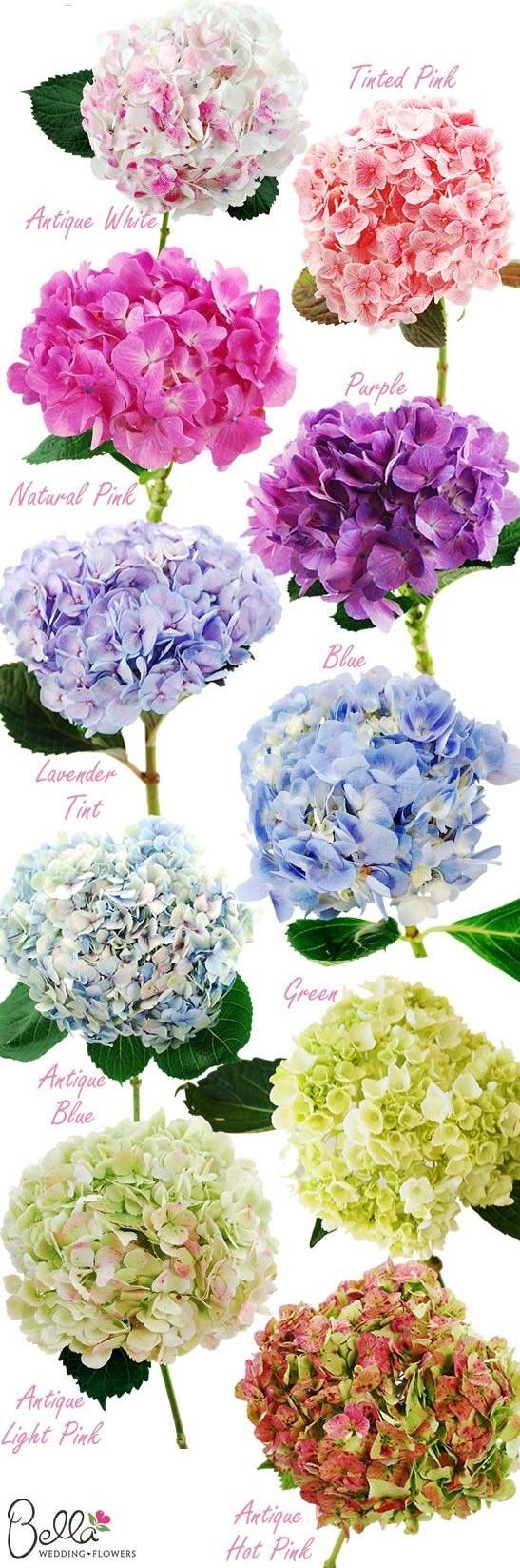 Colores de hortensias - bodas