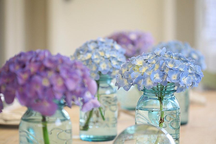 Hortensii-pentru-decorar-blog argyor